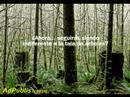 Tala de Arboles en el Amazonas (version cine mudo)