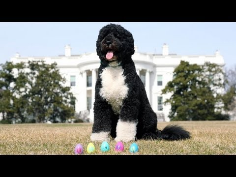 The 2013 Official (White House) Easter Eggs  3/18/13