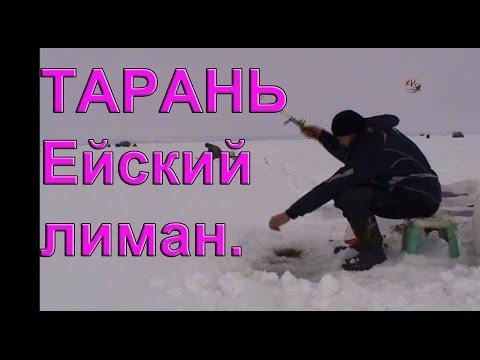 Тарань бриньковская бегство со льда mp4