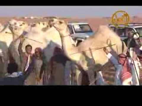 مسيرة منقية ابل سعد بن فارس بن درعان العتيبي (الغاشميات ) عام 1435 هــ