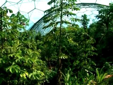 Eden Project: Rainforest Biome, canopy view