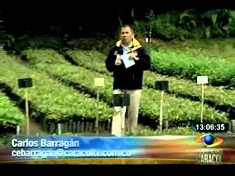 Deforestación genera inundaciones en Cundinamarca