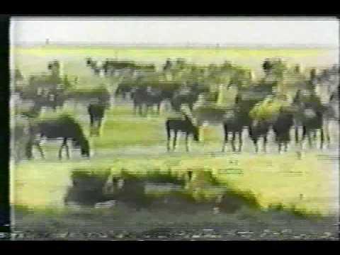 LA FAUNA AFRICANA 6