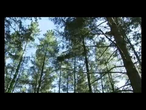 El bosque protector. Celulosas: el papel del bosque