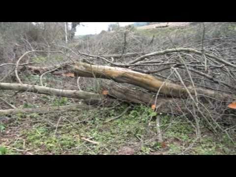 CRÓNICA Candás UICA denuncia tala árboles ribera rio por HC Energía