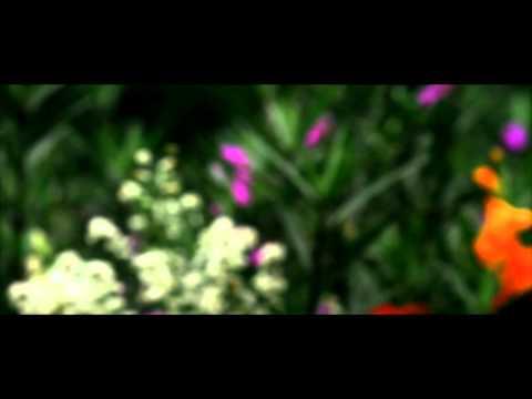 Antara Cinta dan Dusta (Feat. Evan Sanders)