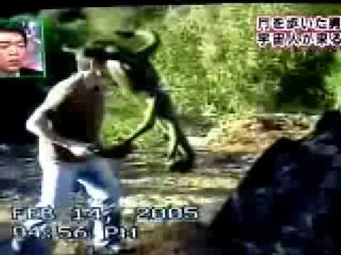 Unknown Alien Creature grabs a tourist face