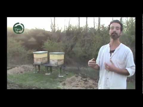 Instalación de Apiario en Apicultura Natural (parte 1 de 2)