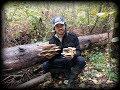 Сбор грибов.Сбор опят от 11.10.17.Вешенки.Опята.Языки.Зонтики.