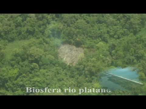 La moskitia deforestación