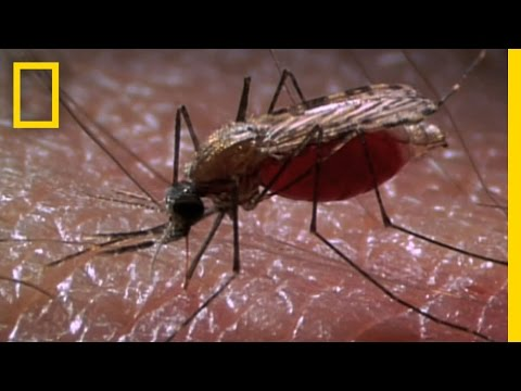 New Laser Zaps Mosquitoes in SlowMotion