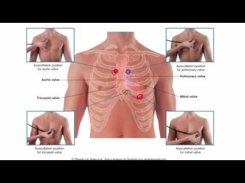 Anatomy 1 | C1 - L7 | Heart and pericardium