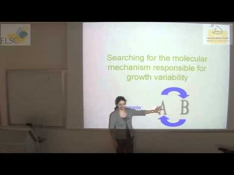 ELSC-ICNC Seminar: Nathalie Balaban