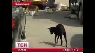 Собаки растерзали младенца, выброшеного в мусорный бак