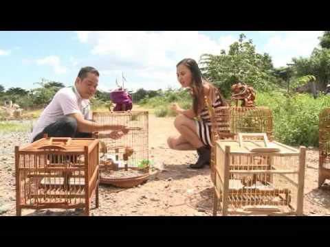 Cách nuôi chim kiểng
