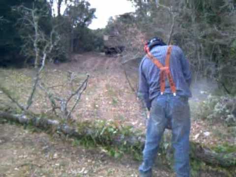 talando en el bosque.wmv