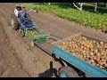 Уборка картофеля. Мотоблокопоезд: сам копает, собирает и везёт.