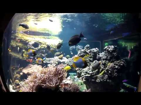 Underwater Sea Creatures @ Henry Doorly Zoo