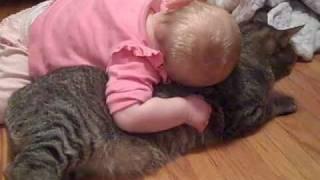 猫が大好きな赤ちゃん。猫のほうはすげぇ迷惑そうだなw。