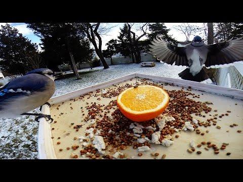 Gopro feeder cam