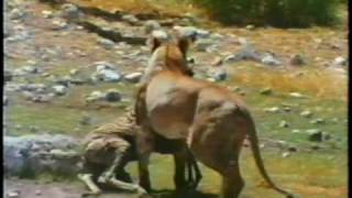 Vida selvagem na Africa.avi - YouTube