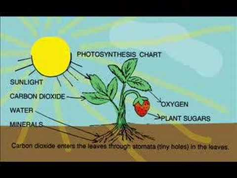 Narrated Video: A Plant Story