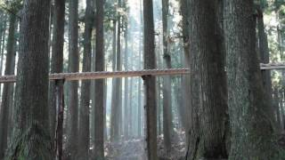 森の木琴 - Xylophone - Touch Wood - A Japanese Commercial in the Woods of Kyushu, Japan