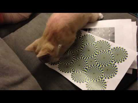 Cat Can See The Rotating Snake Illusion