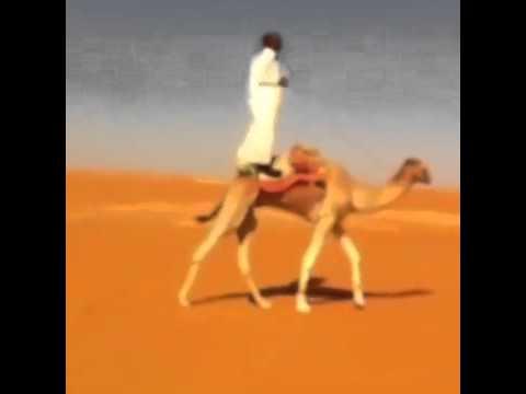 شاهد حادث سقوط شاب سعودي عن ظهر جمل تحت سيارة