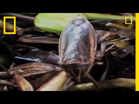 Extreme Eats: Bugs