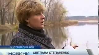 Жители села на Житомирщине волнуются за лебедя, который не смог улететь на зимовку