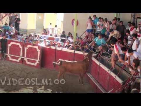 Cadreita vacas lunes 16 julio 2012