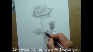 by Юрий Синчуков • 76 views. Как нарисовать розу карандашом. Sort by: time