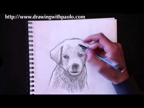 Drawing a dog with Paolo Morrone