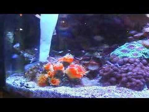 Maintaining A Saltwater Aquarium The Easy Way Segment