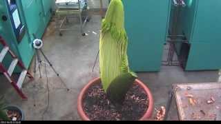 5分鐘見證這棵植物的生長到死亡...