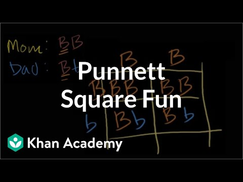 Punnett Square Fun
