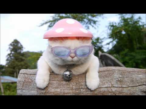 Mushroom hat funny cat