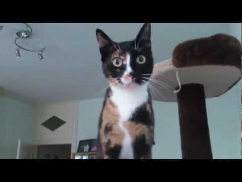 chat rigolo qui va plus vite que son ombre!!!!