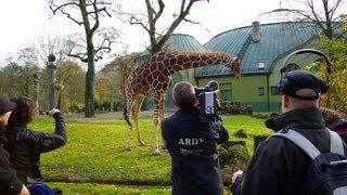 Folge 01: Adjektive steigern | Im Zoo
