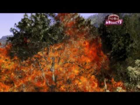 DEFORESTACION SAN MIGUEL CHICAJ BAJA VERAPAZ -SAMUEL-