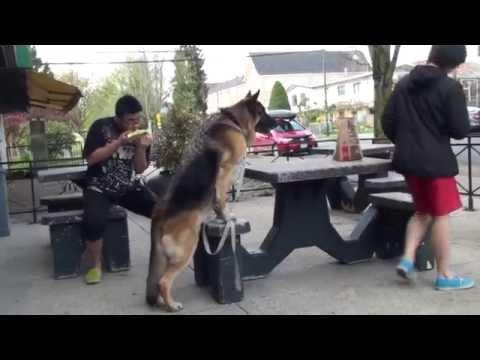 德國狼狗:我的漢堡包呢?!