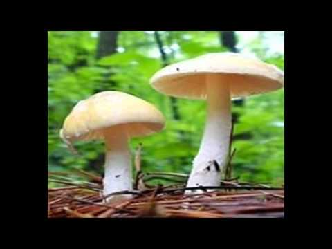 reino fungi y plantae