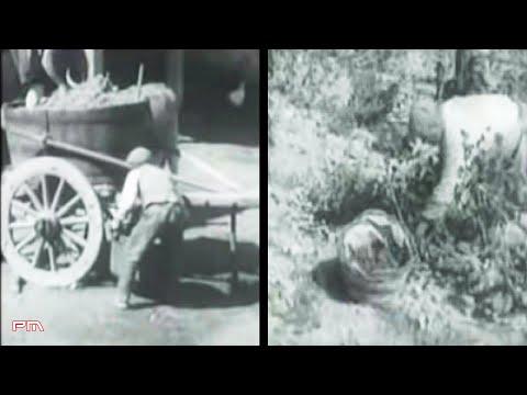 La produzione del vino in Sardegna negli anni '60 [Istituto LUCE 1964]