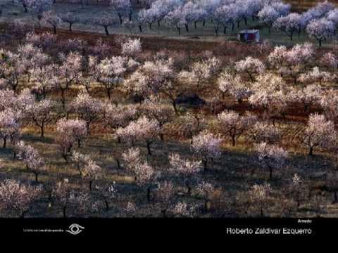 Concurso Fotográfico Sotos Alfaro 2009 1/2