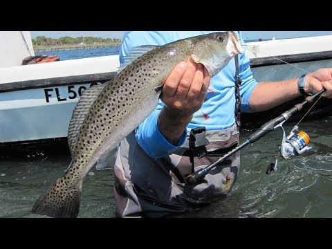 Treasure Trout (NEW EPISODE) - BIGGEST 3 SPECKLED SEATROUT ever on TV
