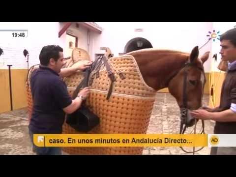 El caballo, antes de la faena