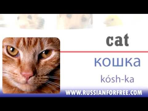 Russian vocabulary: Animals - pets