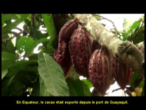 Cacao : historia del cacao y testimonios de productores en América Latina (sous-titré français)