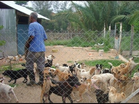 500 anjing dapat perlindungan pasangan Melayu [ENG SUB]
